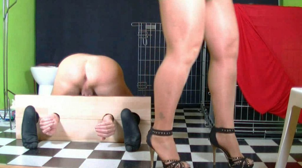 The ass of the human toilet must be punished in order to work properly-1