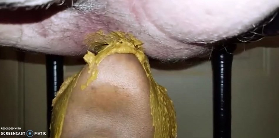Males Diarrhea - Great Shitting on the Face 2